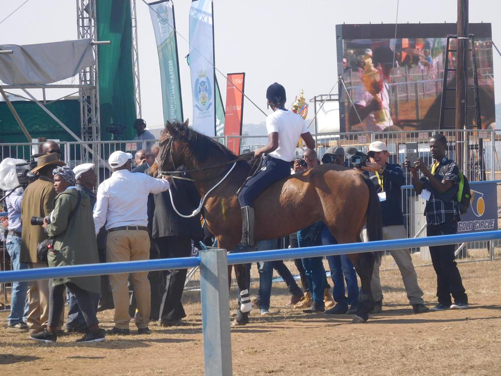 Pinky équitation grosse queue
